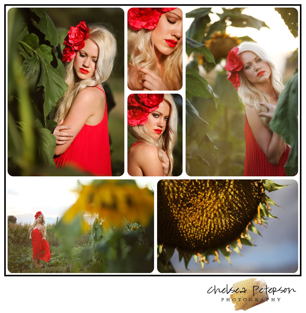 photography in sunflowers